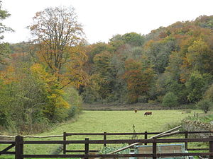 Five Valleys - A field at Baker's Mill in the Golden Valley