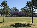 Gordon Thomson Park, Rosebery Terrace, Chelmer, QLD Australia 2.jpg