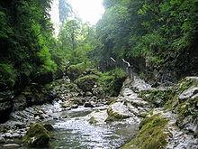 Gorges de Kakoueta- arbres, mousse, torrent.jpg