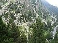 Gorges de Núria des del cremallera P1030244.JPG