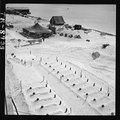 Graves of U.S. Marines who died taking Tarawa, before headstones were prepared. In background are the first tents put... - NARA - 520722.tif