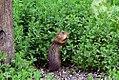 Ground Squirrel! (19286115770).jpg