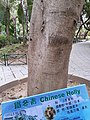 HK 中環 Central 遮打花園 Chater Garden flora green leaves n trees March 2020 SS2 57.jpg