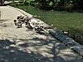 Hagerstown City Park 12.jpg