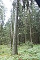 Hajnówka, Poland - panoramio (14).jpg