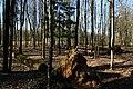 Hajnówka, Poland - panoramio (227).jpg