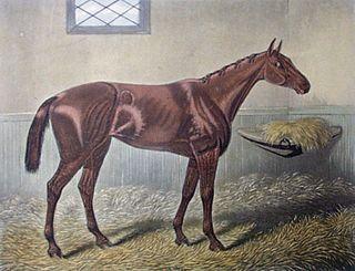 Hannah (horse) British-bred Thoroughbred racehorse