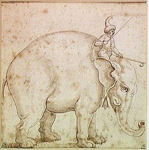 Capture of Malacca (1511) - Elephant Hanno and his mahout, Pen and ink, 1575, Museum of Fine Arts in Angers.