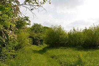 Hawkenbury Meadow