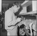 Heart Mountain Relocation Center, Heart Mountain, Wyoming. A shoemaker busy on a machine in a shoe . . . - NARA - 539210.tif