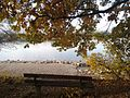 Heidenfahrt Rheinufer 05 11 2015 (4).jpg