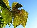 Herbst ……. - panoramio.jpg