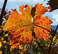 Herbst P1260411.jpg