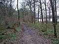High Park Wood - geograph.org.uk - 311832.jpg