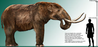 Paleo-Indians - The Mammut americanum (American mastodon) became extinct around 12,000–9,000 years ago due to human-related activities or climate change. A hybrid of human-related activities and climate change has been proposed in recent years. See either Quaternary extinction event or Holocene extinction