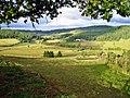 Hillside views at Sweet Cheeks Winery.jpg