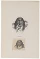 Homo sapiens - Patagonië - 1700-1880 - Print - Iconographia Zoologica - Special Collections University of Amsterdam - UBA01 IZ19500198.tif