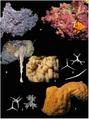Homoscleromopha diversity.png