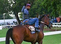 Barbados-Sports-Horesandjockey