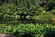 Hortus botanicus Leiden Lake in the park.JPG