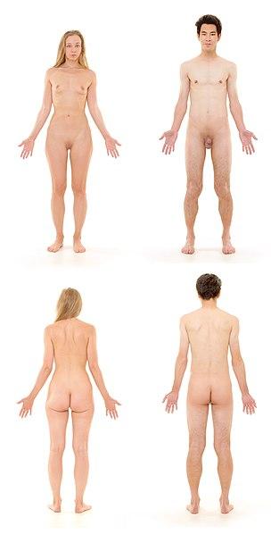 File:Human Body.jpg