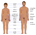 Human body features EN.svg
