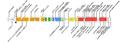 IPEX Mutations.png
