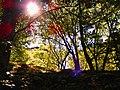 Il sole tra gli alberi del parco.JPG