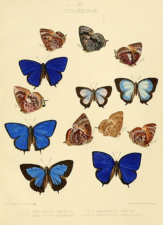 William Chapman Hewitson - Plate II of Illustrations of Diurnal Lepidoptera, Lycaenidae