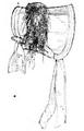 Illustrirte Zeitung (1843) 02 016 4 Reisstrohhut.PNG