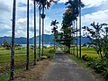 Indahnya jalan berlatar bukit Danau Maninjau (2).jpg