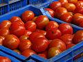 India - Koyambedu Market - Tomatoes 02 (3987058522).jpg
