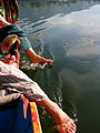 India - Srinagar - 017 - luxurious water (3918579609).jpg