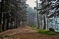 Into the wild forest at Patriata, Pakistan.jpg