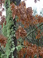 Inverno (4279571319).jpg