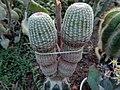 "Iran-qom-Cactus-The greenhouse of the thorn world گلخانه کاکتوس ""دنیای خار"" در روستای مبارک آباد قم- ایران 31.jpg"