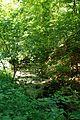 Jablanik - Zapadna Srbija - Izvore reke Jablanice - Detalj 4.jpg