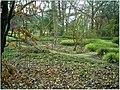 January Frost Botanic Garden Freiburg Panorama - Master Botany Photography 2014 - panoramio (1).jpg