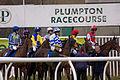 Jockeys at Plumpton Races (4370606996).jpg