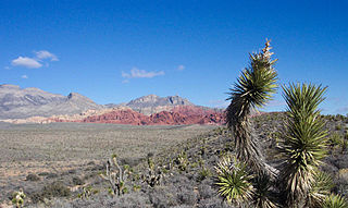 Clark County, Nevada U.S. county in Nevada