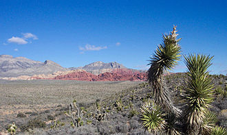 Nevada - Red Rock Canyon National Conservation Area