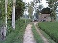 Js field - panoramio.jpg