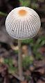 Jyväskylä - mushroom 25.jpg
