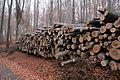 Křivoklátsko - Těžba dřeva.JPG