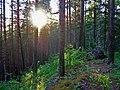 Kachkanar, Sverdlovsk Oblast, Russia - panoramio - Oleg Seliverstov (3).jpg