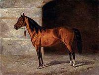Karabakh stallion Khan.jpg