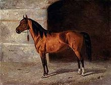 Painting of a bay stallion
