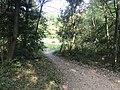 Kasuya Research Forest of Kyushu University 23.jpg