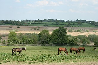 County Kildare - Horses near Pollardstown Fen