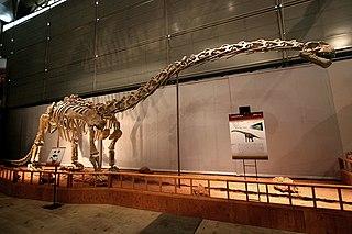 <i>Klamelisaurus</i>